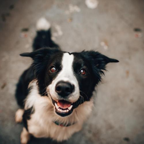 Kutya nyomkövetővel növelhetjük a kutya biztonságát!
