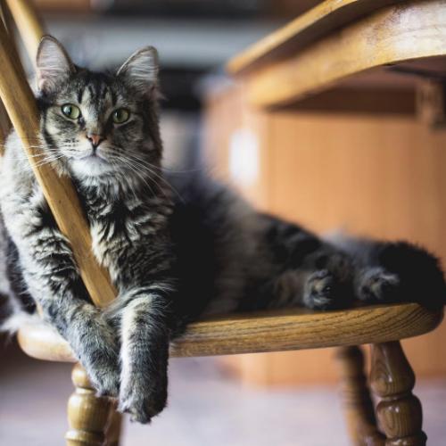 Macska nyomkövetővel megelőzhetjük az eltűnéseket!